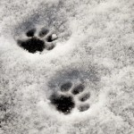 Schneespaziergang